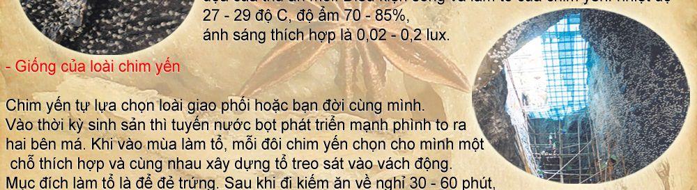 to-yen-sao-khanh-hoa-cao-cap_025