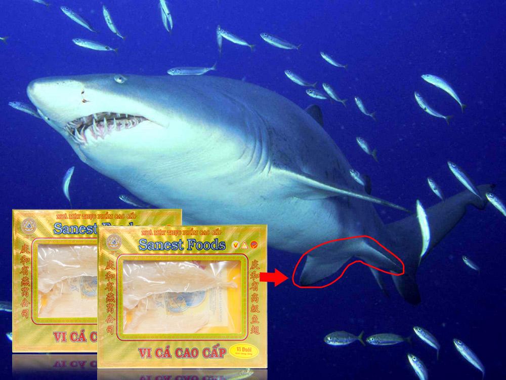 VC Vi đuôi cá mập hộp 200g VC001 2