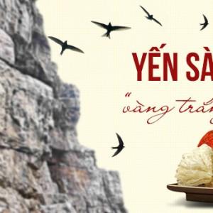 Yến sào Khánh Hòa – vàng trắng của nước Việt